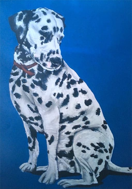 dalmation pet portrait