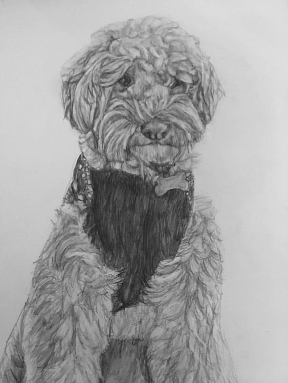 dog portrait sketch