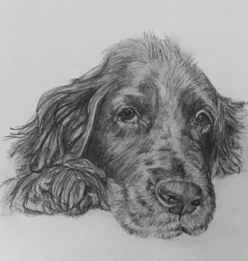 doggy pet portrait