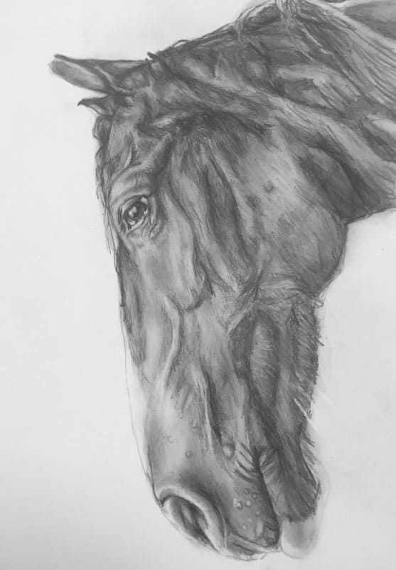 horse pencil portraits