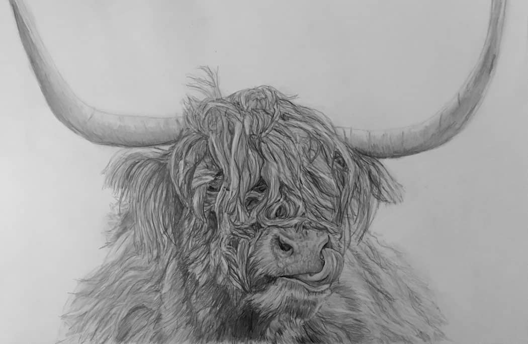 pet portrait cattle