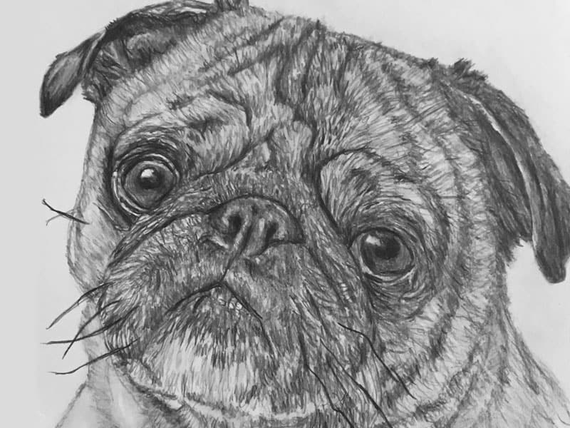 start a pet portrait