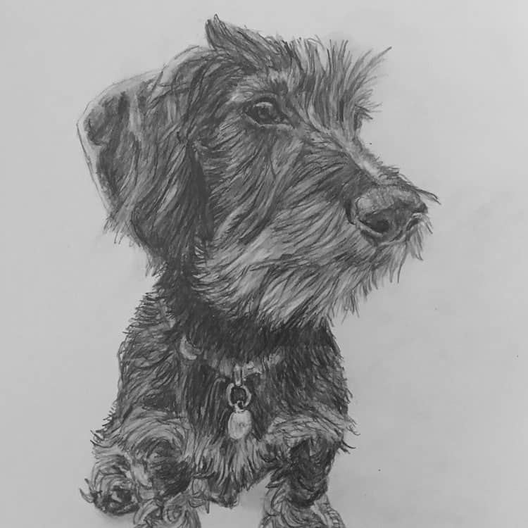 pet portrait terrier
