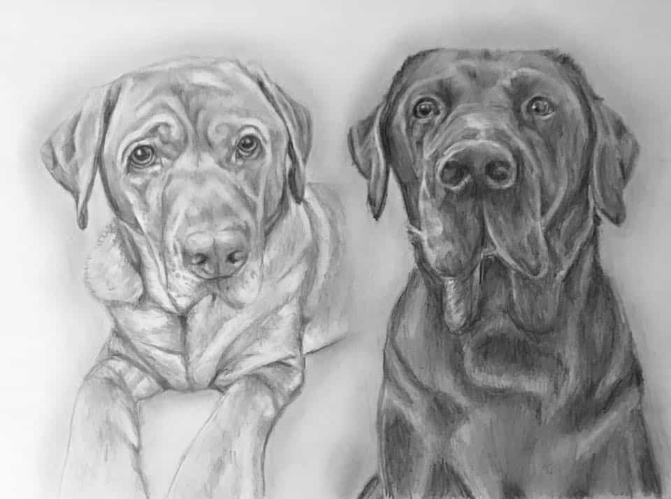 pet portraits labradors
