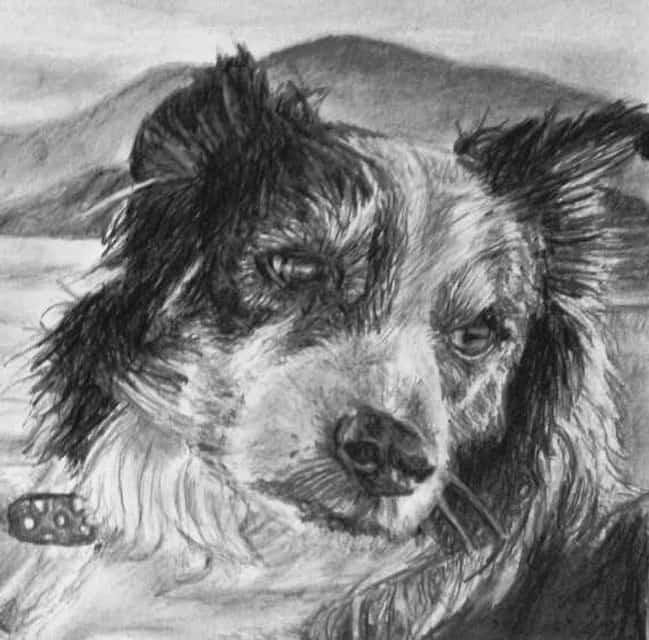 portrait of pet