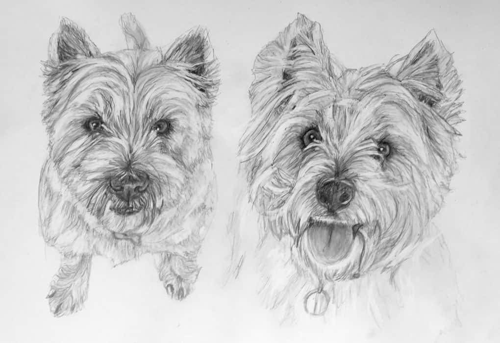 west highland terrier pet portrait