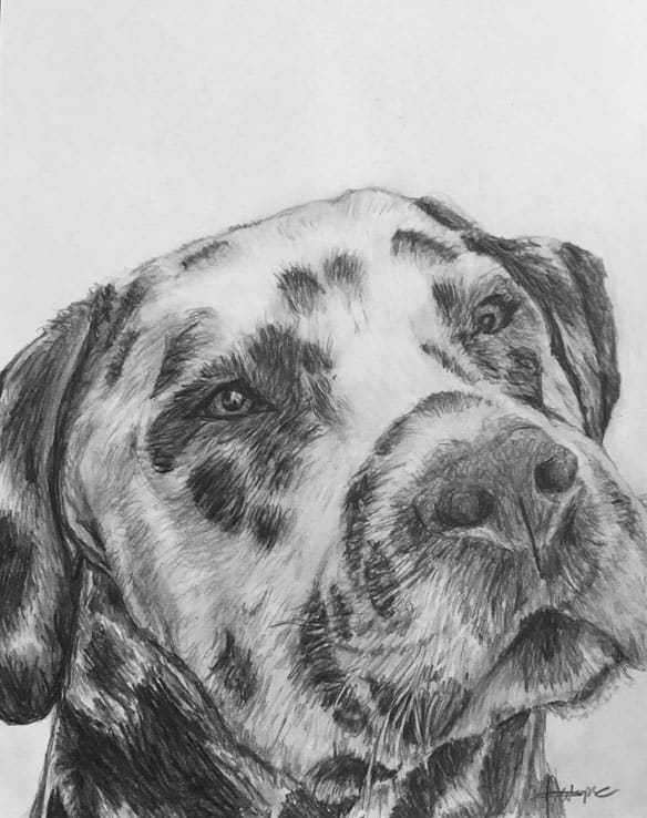 pet portraits dogs head