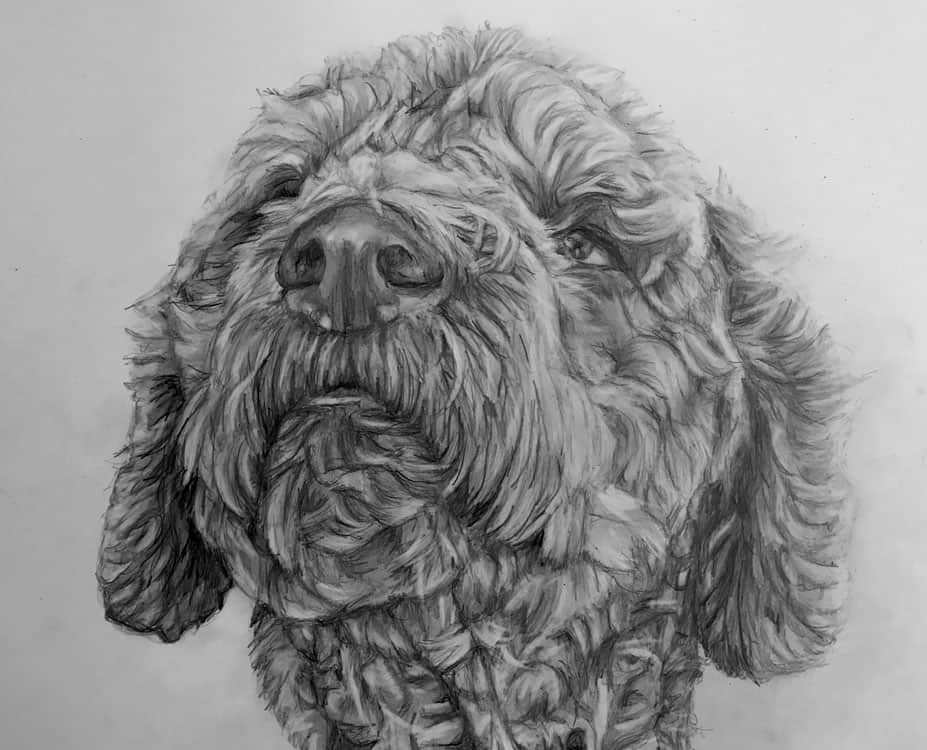 pet portraits labradoodle pencil portrait