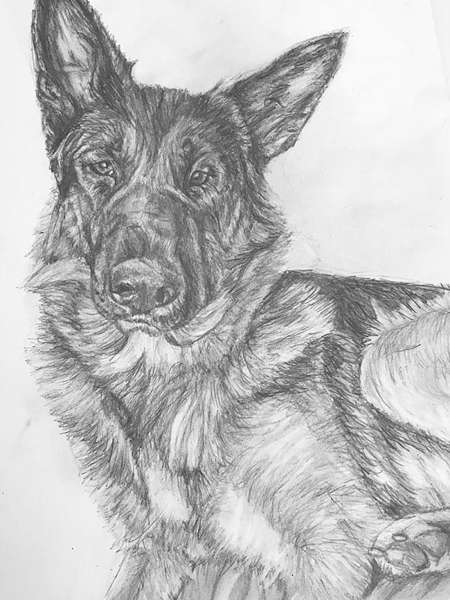 hand drawn german shephard